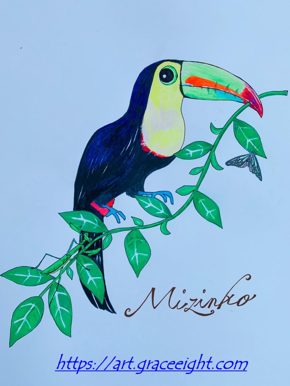 オオハシ(南米のカラフルな鳥)Miジンコ